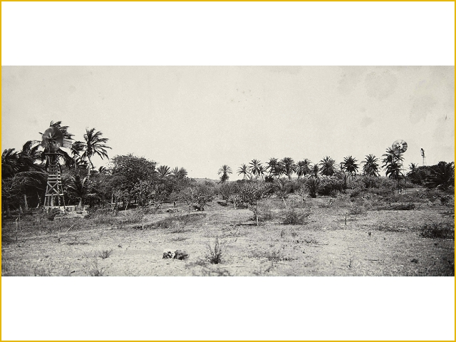 boomgaard op plantage coraal tabak TM 60019491 Soublette et fils